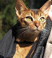 Mira_cats